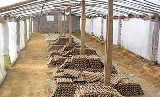 山西蝎子养殖场
