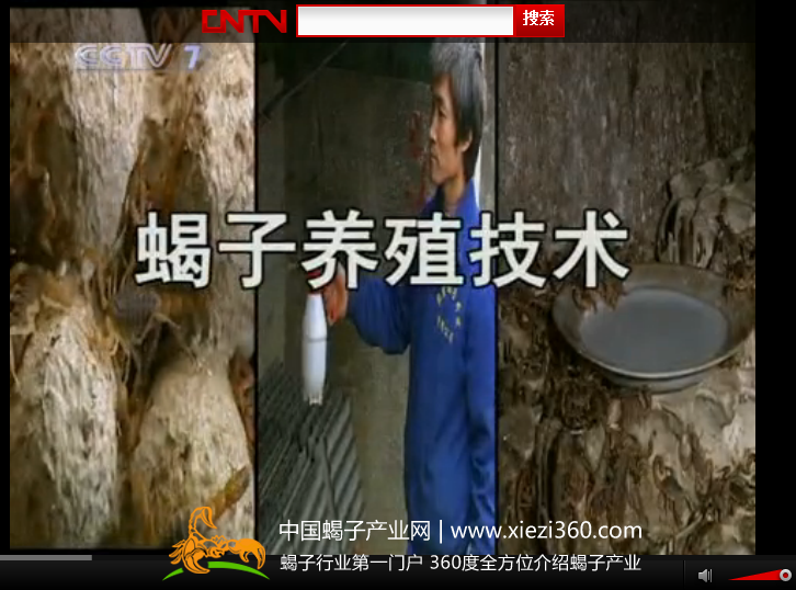 蝎子养殖技术-央视-农广天地