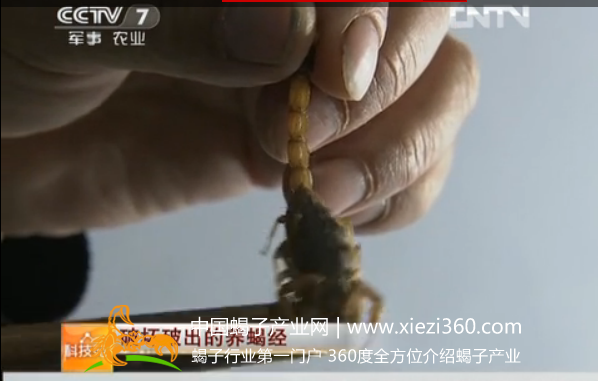 科技苑蝎子养殖