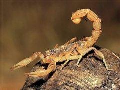 全国最大的蝎子养殖基地在哪儿?