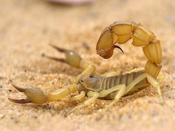 种蝎一般卖多少