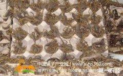 蝎子养殖网,介绍几种药物养蝎的办法?
