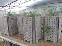 蝎子养殖,蝎子养殖骗局多,养殖模式是关键。