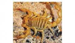 诱发蝎子发病的病原体有哪些因素?