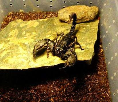 蝎子养殖骗局那么多,有哪几个是真的