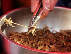 农村家庭养殖蝎子怎么样,可以赚钱吗?乡村饲养蝎子有什么优势?