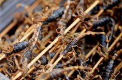 公蝎子营养价值高还是母蝎子营养价值高?蝎子的公母药用有什么不同?