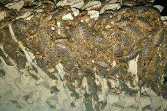春夏秋冬一年四季蝎子养殖注意事项,蝎子养殖技术要掌握好