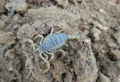 蝎子养殖技术完整版大全套蝎子养殖经验方法总结