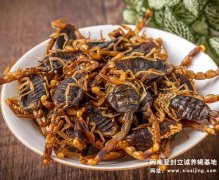 食用蝎子养殖技术及市场前景,全蝎养殖知识讲解