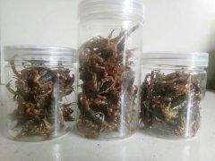 油炸蝎子每次吃多少只,老人、孕妇、小孩服用